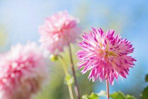 flower-1298205_960_720